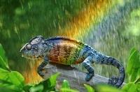 Rainbow chameleon in the rain (conceptual composite image)
