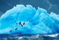 Adelie Penguins on blue iceberg, Antarctica.