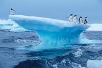 Adelie penguins on iceberg, Antarctica. (conceptual composit