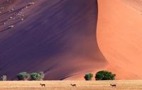 Namib Desert, Namibia, Africa 22206001416| 写真素材・ストックフォト・画像・イラスト素材|アマナイメージズ