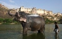 Elephant with mahout bathing in the river below the Amber Fo 22206001964| 写真素材・ストックフォト・画像・イラスト素材|アマナイメージズ