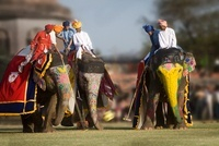 Elephants and mahouts playing a game of polo, Jaipur festiva 22206002116| 写真素材・ストックフォト・画像・イラスト素材|アマナイメージズ