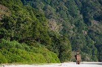 Elephant and mahout on beach in India 22206002146| 写真素材・ストックフォト・画像・イラスト素材|アマナイメージズ