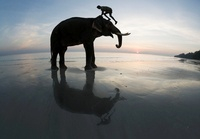 Silhouette of mahout climbing onto elephant on the beach, In 22206002159| 写真素材・ストックフォト・画像・イラスト素材|アマナイメージズ