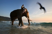 Mahout riding on Indian elephant on the beach at dusk, Andam