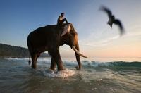 Mahout riding on Indian elephant on the beach at dusk, Andam 22206002190| 写真素材・ストックフォト・画像・イラスト素材|アマナイメージズ