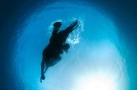 Indian elephant swimming underwater, India