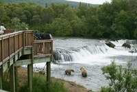 Viewing platform for people to watch Brown bears fishing, Br