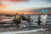 Fishermen with their early morning catch, Yoff, Dakar, Seneg