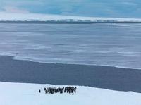 Emperor penguins gathering at ice edge before jumping into s 22206003032| 写真素材・ストックフォト・画像・イラスト素材|アマナイメージズ