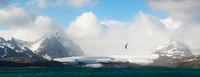 Wandering Albatross flying over the Bay of Isles with Salisb