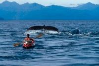 Duncan Murrell photographing whales, Alaska