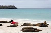 Galapagos sealions and tourist, Espanola (Hood) Island, Gala