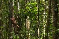 Huaorani Indian , Ontagamo Kaimo, hunting with his  blowgun.