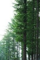 Summer Forest,Korea