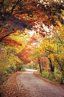 Mungyeongsaejae Provincial Park,Mungyeong-si,Gyeongbuk,Korea 22215001353| 写真素材・ストックフォト・画像・イラスト素材|アマナイメージズ