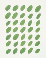 新緑の葉のパターン
