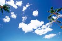 晴天の空とやしの木 22257001585| 写真素材・ストックフォト・画像・イラスト素材|アマナイメージズ