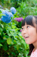 あじさいの花と少女