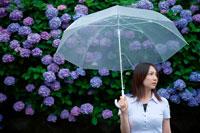 あじさいの花と雨傘をさす女性