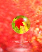 紅葉の球体と水滴CG