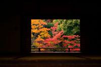 紅葉 22257002832| 写真素材・ストックフォト・画像・イラスト素材|アマナイメージズ