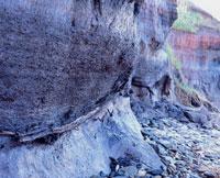 最終氷期埋没林地帯