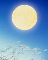 満月とススキのイメージ 22276001662| 写真素材・ストックフォト・画像・イラスト素材|アマナイメージズ