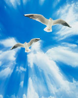 青空と鳥 CG