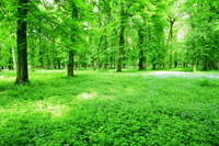 新緑の森林