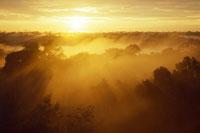 アマゾンの熱帯雨林 22276003371| 写真素材・ストックフォト・画像・イラスト素材|アマナイメージズ