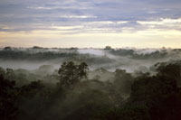 アマゾンの熱帯雨林 22276003372| 写真素材・ストックフォト・画像・イラスト素材|アマナイメージズ