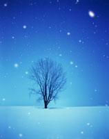 雪の中の日
