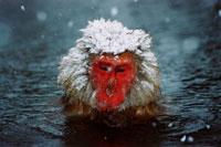 温泉につかる猿