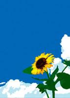 夏の青空とひまわり