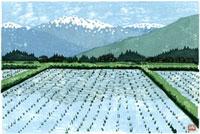 ふるさと風景版画の水田