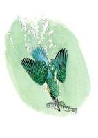 野鳥 水中で魚を捕るカワセミ