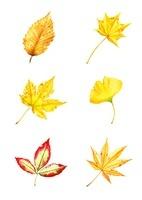 モミジなど様々な植物の葉の紅葉