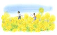 菜の花畑で虫とりをする子供たち 22276007328| 写真素材・ストックフォト・画像・イラスト素材|アマナイメージズ