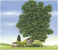 和田家の大きな木
