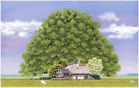 田園の大樹 22276007541| 写真素材・ストックフォト・画像・イラスト素材|アマナイメージズ