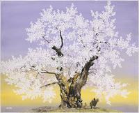 荘川桜 かごを背負って