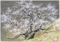 臥龍桜 22276007616| 写真素材・ストックフォト・画像・イラスト素材|アマナイメージズ
