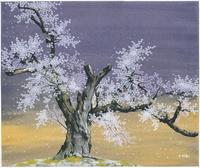 釜の越桜 22276007617| 写真素材・ストックフォト・画像・イラスト素材|アマナイメージズ