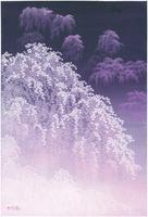 幻想の枝垂桜