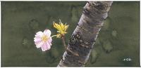 八重桜一輪
