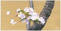 オオシマ桜 22276007622| 写真素材・ストックフォト・画像・イラスト素材|アマナイメージズ