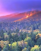 秋の樹林 22320008408| 写真素材・ストックフォト・画像・イラスト素材|アマナイメージズ