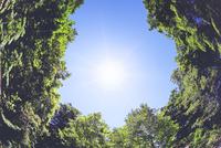 新緑と太陽の光
