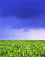 菜の花畑と雷